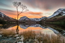 Vibrant Orange Sunrise With Moving Clouds And Snowcapped Mountains Reflecting In Calm Still Water With Lonely Tree In Foreground At Buttermere, Lake District, UK.