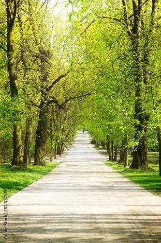Spoed Foto op Canvas Weg in bos alley in park