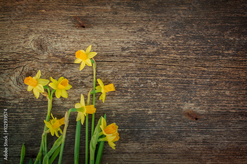 In de dag Narcis daffodils on wooden background