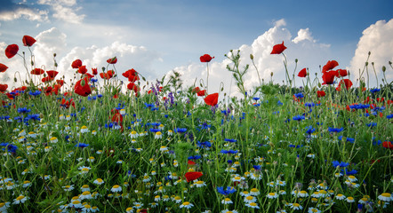 FototapetaHappiness , vitality : Spring awakening with fragrant , colorful spring meadow :)