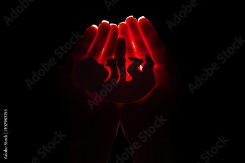 Fototapeta embryo silhouette in woman hand