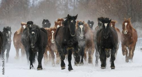 雪原を走る馬 Wallpaper Mural