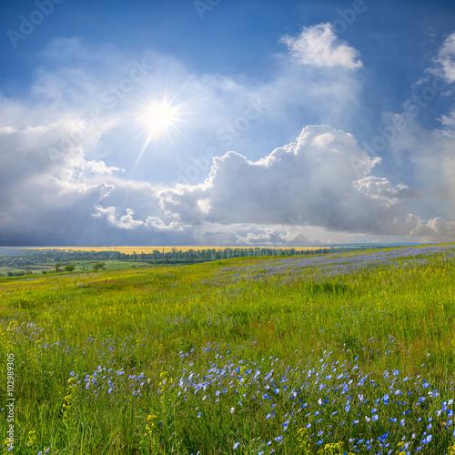 zielona-laka-z-pieknym-niebem-na-tle