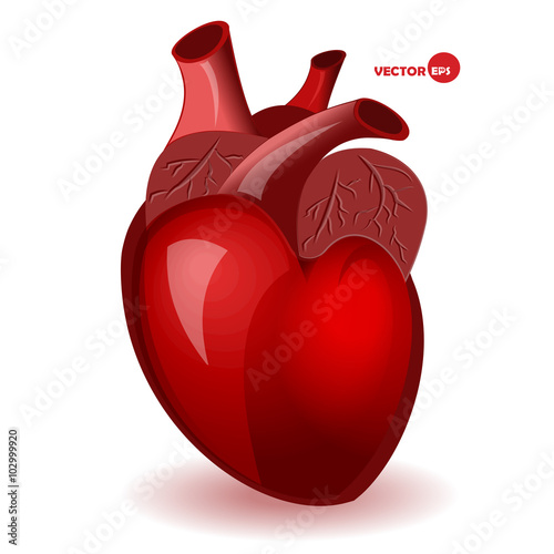 Body Heart With Veins In A Simple Comic Style Valentines Day Humor