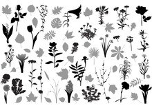 Collection Of 32 Various Silho...