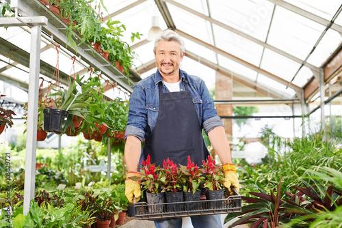 Fotografie, Obraz Gärtner im Gartencenter trägt Blumen