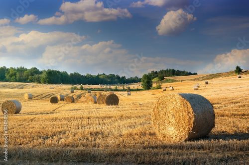 Foto auf Gartenposter Landschappen Haystacks on the field. Summer, rural landscape.