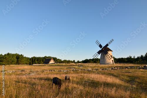 Aluminium Prints Mills Alte traditionelle Windmühle auf der Insel Fårö, Schweden, im Sommer mit Gotlandsschaft im Vordergrund