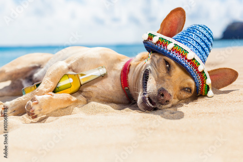 Fotografie, Tablou drunk  dog on the beach