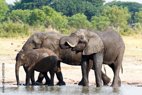 Foto op Aluminium Afrika Elephants drinking at waterhole