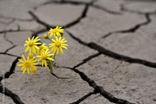 Fotografia Life in extreme conditions