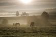 Sonnenaufgang im Nebel auf dem Feld und Pferden