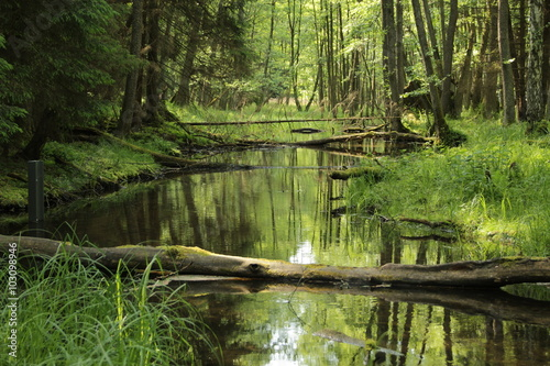 Leśne rozlewisko