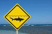 Yellow Shark Warning Sign