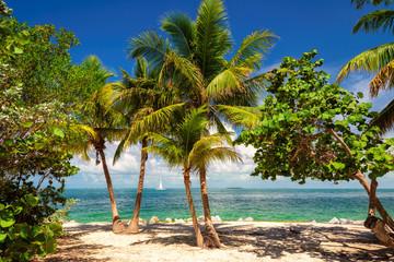 Palm trees on a tropical beach Key West, Caribbean sea