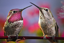 Two Hummingbirds Stand Next To...