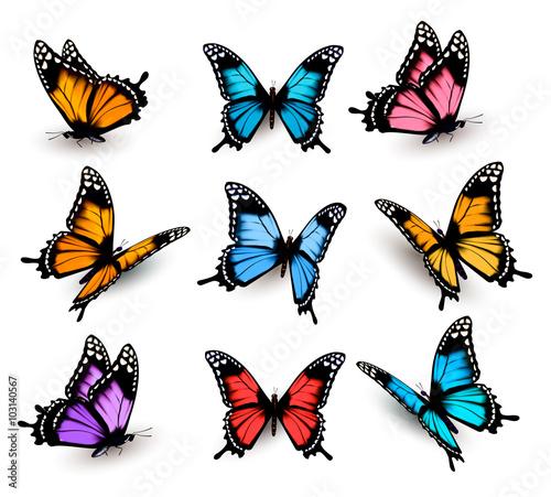 Obraz na płótnie Big collection of colorful butterflies. Vector