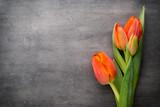 Fototapeta Tulipany - Tulips, orange on the grey  background.