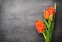 Tulips, Orange On The Grey  Background.