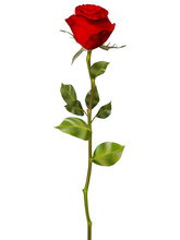 Red Rose Isolated On White. EP...
