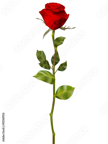 Photo  Red Rose isolated on white. EPS 10