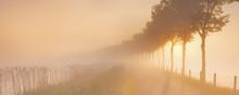 Foggy Sunrise In Typical Polder Landscape In The Netherlands