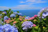 紫陽花と海