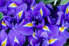 Texture Close-up Of Iris Flowers