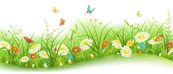 Fototapeta Do przedszkola Spring or summer floral banner with green grass, flowers and butterflies