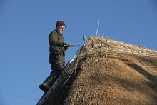 Thatcher Working On The Ridge Of A Thatched Roof With Hazel Wood Spars
