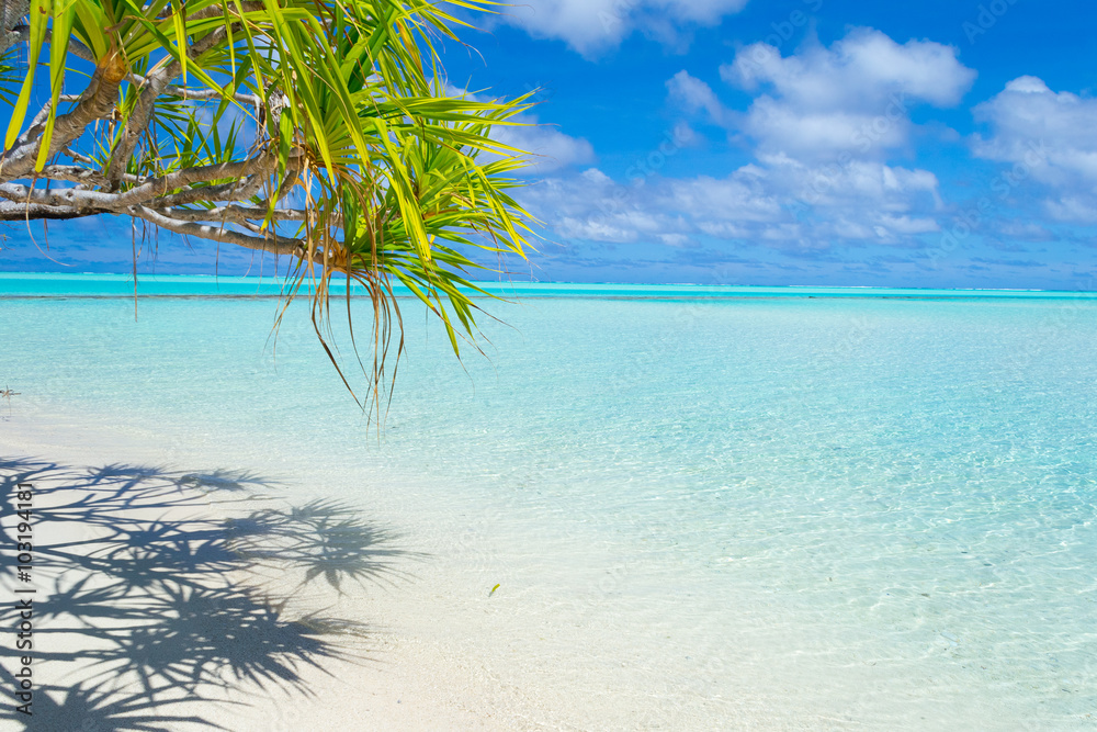 Fototapeta Palm frond on white beach and gorgeous turquoise water at desert One Foot Island, Aitutaki, Cook Islands