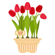 Vector Illustration With Flower Pot And Tulip