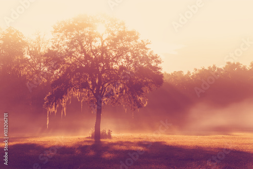 Carta da parati Silhouette of a lone tree in a field early at sunrise or sunset with sun beams m