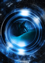 Horse In Space, In Circle Light. Mirror On The Planet Earth. Animal Concept,  Profile Portrait. Winter Effect And Blur Color.