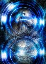Horse In Space With Ornamental Mandala. Mirror On The Planet Earth. Animal Concept,  Profile Portrait. Winter Effect And Blue Color.
