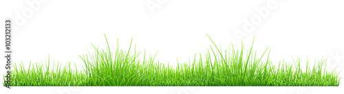 Obraz Green grass - fototapety do salonu