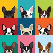 Boston Terrier Pattern [Converted]