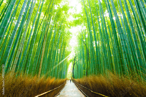 Tuinposter Bamboo Morning Arashiyama Bamboo Forest People Walking