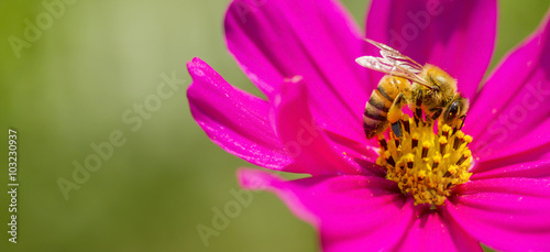 Tuinposter Bee Honey Bee, Bee