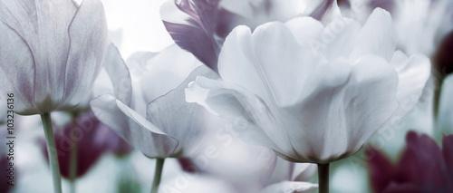 Foto-Schiebegardine ohne Schienensystem - tinted tulips concept
