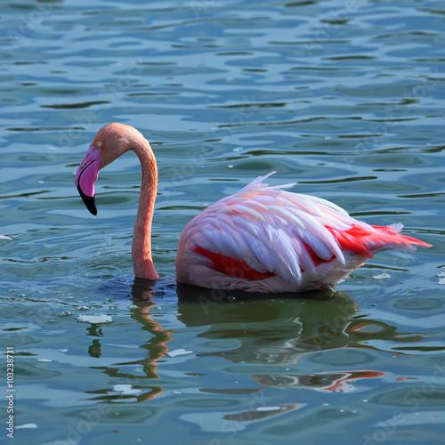 Foto op Aluminium Flamingo Pink Flamingo