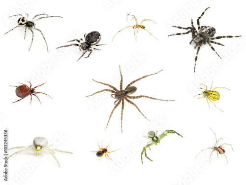 Collection of many different spiders on white background