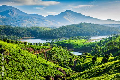Tea plantations and river in hills. Kerala, India Canvas Print