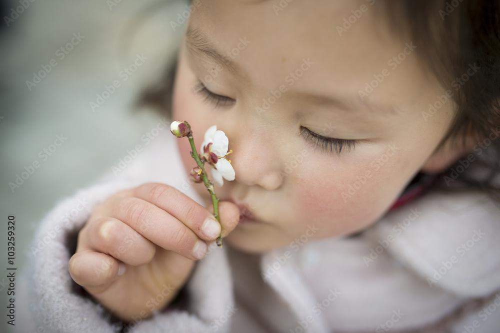 Fototapety, obrazy: 梅の花の香りを嗅ぐ女の子