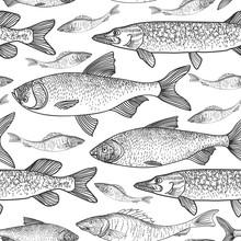 Fish Seamless Background. Sketch Underwater Marine Life Pattern. Swimming Fish Sketch