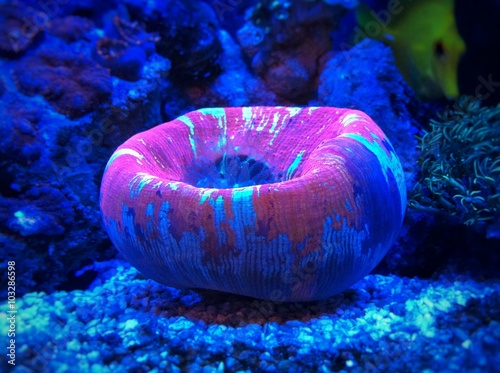 Poster Coral reefs Amazing coral under moonlight