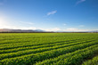 canvas print picture - Organic Farm Land Crops In California. Blue skies, palm trees, multiple layers of mountains add to this organic and fertile farm land in California.