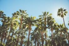 Palm Springs Movie Colony Palm...