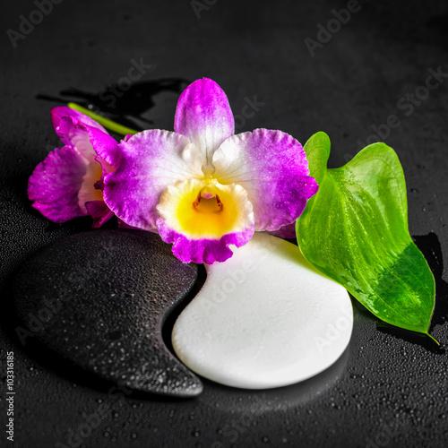 Plakat Yin-Yang symbol tekstury kamienia z zielonym liściem Calla lily and