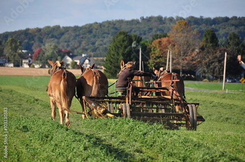 Fotografia Lancaster County, Pennslvania - October 15, 2015:  Amish youth cutting grass sea